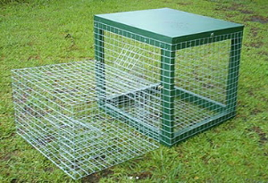 Australian made indian myna cage